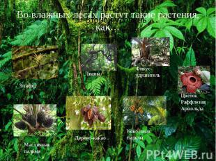 Во влажных лесах растут такие растения, как…