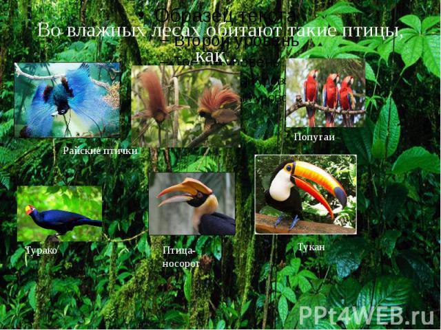 Во влажных лесах обитают такие птицы, как…
