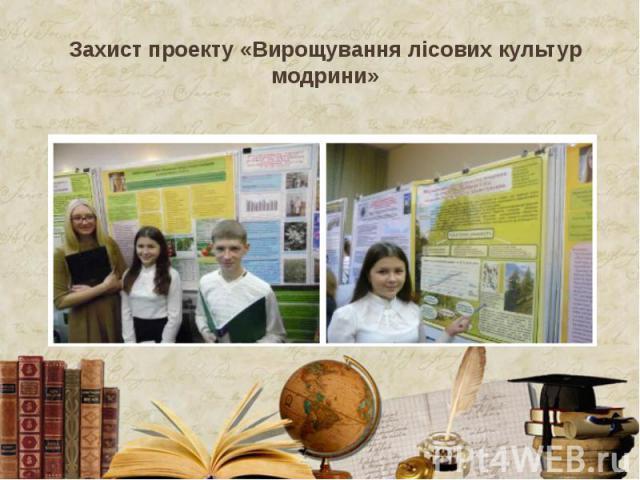 Захист проекту «Вирощування лісових культур модрини»