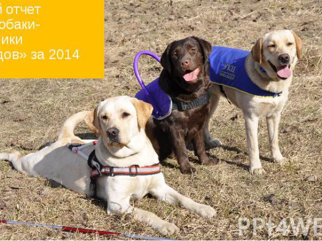 Годовой отчет УКЦ «Собаки-помощники инвалидов» за 2014 год