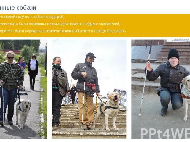 Переданные собаки 18 незрячих людей получили собак-поводырей; 2 собаки-ассистента были переданы в семьи для помощи людям с эпилепсией; 1 собака-терапевт была передана в реабилитационный центр в городе Ярославль.