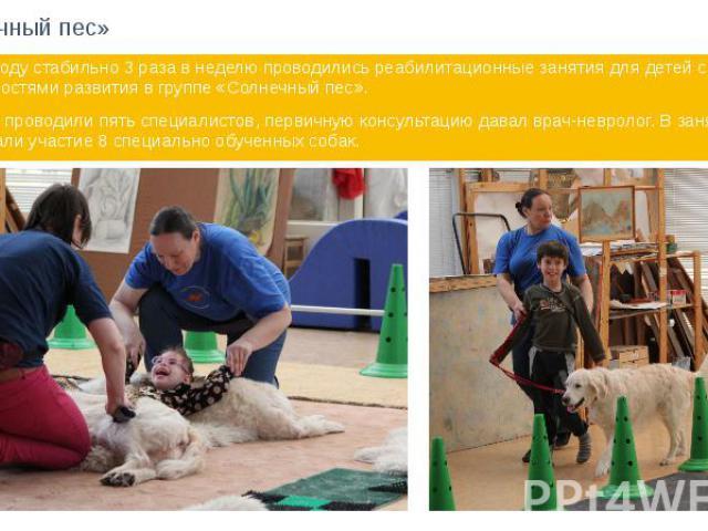 «Солнечный пес» В 2014 году стабильно 3 раза в неделю проводились реабилитационные занятия для детей с особенностями развития в группе «Солнечный пес». Занятия проводили пять специалистов, первичную консультацию давал врач-невролог. В занятиях прини…