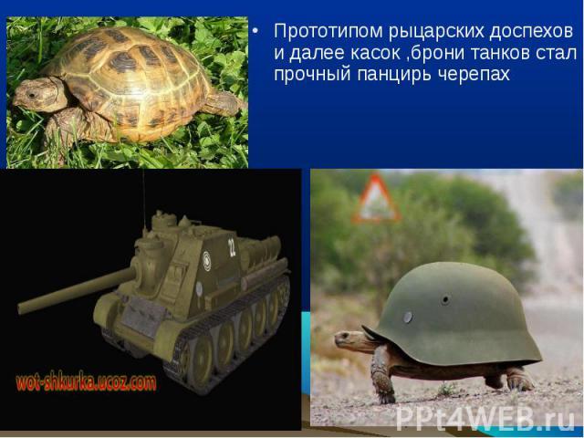 Прототипом рыцарских доспехов и далее касок ,брони танков стал прочный панцирь черепах Прототипом рыцарских доспехов и далее касок ,брони танков стал прочный панцирь черепах