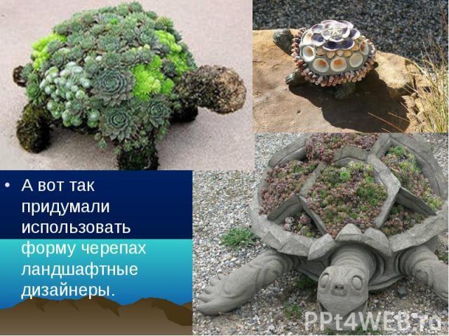 А вот так придумали использовать форму черепах ландшафтные дизайнеры. А вот так придумали использовать форму черепах ландшафтные дизайнеры.