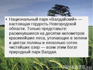 Национальный парк «Валдайский» — настоящая гордость Новгородской области. Только