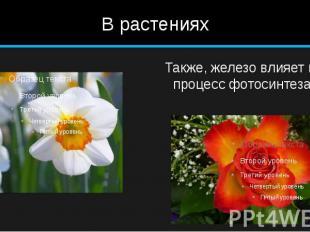В растениях
