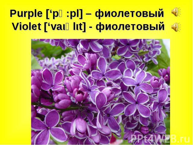 Purple ['pә:pl] – фиолетовый Violet ['vaιәlιt] - фиолетовый