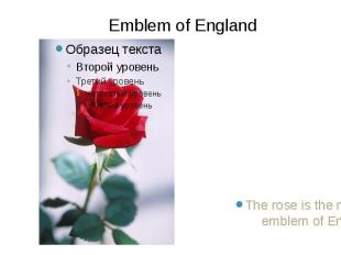 The rose is the national emblem of England. The rose is the national emblem of E