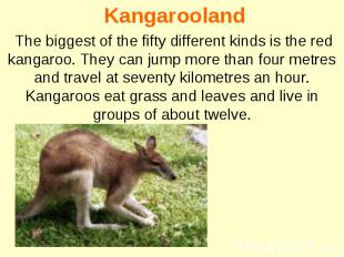 Kangarooland The biggest of the fifty different kinds is the red kangaroo. They