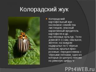 Колорадский картофельный жук - насекомое семейства листоедов, опасный карантинны