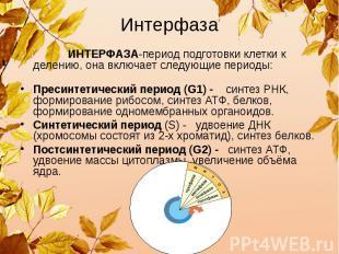 Интерфаза ИНТЕРФАЗА-период подготовки клетки к делению, она включает следующие п
