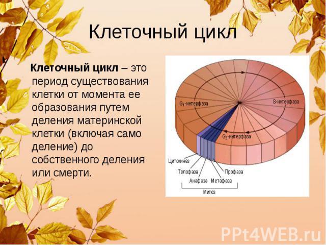 Клеточный цикл Клеточный цикл – это период существования клетки от момента ее образования путем деления материнской клетки (включая само деление) до собственного деления или смерти.