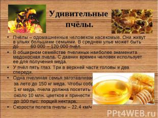 Пчёлы – одомашненные человеком насекомые. Они живут в ульях большими семьями. В