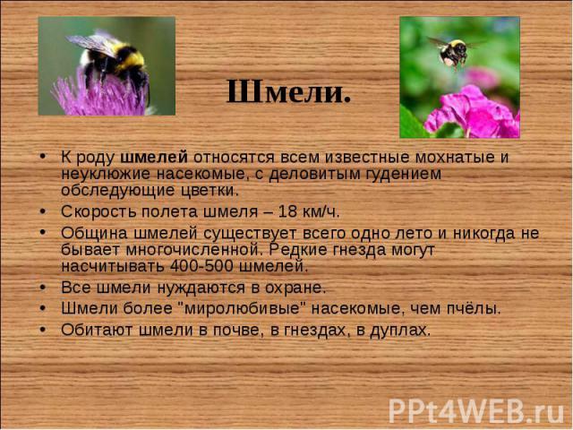 К родушмелей относятся всем известные мохнатые и неуклюжие насекомые, с деловитым гудением обследующие цветки. К родушмелей относятся всем известные мохнатые и неуклюжие насекомые, с деловитым гудением обследующие цветки. Скорость полета…