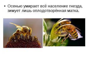 Осенью умирает всё население гнезда, зимует лишь оплодотворённая матка. Осенью у