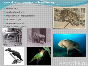 яванский тигр; яванский тигр; сирийский дикий осел; бубал хартебист - подвид ант