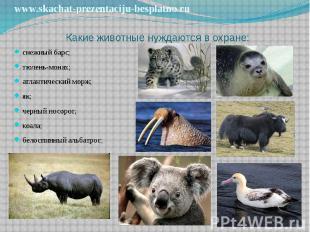Какие животные нуждаются в охране: снежный барс; тюлень-монах; атлантический мор