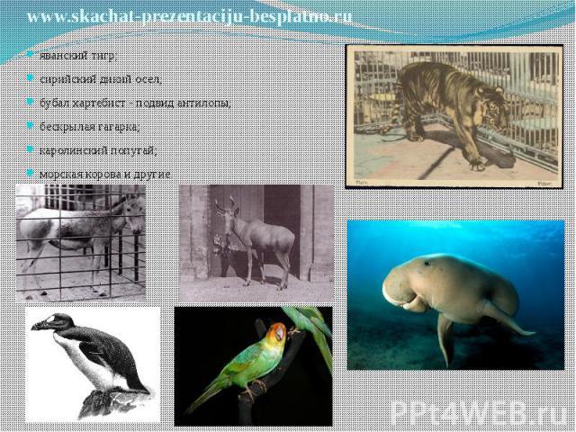 яванский тигр; яванский тигр; сирийский дикий осел; бубал хартебист - подвид антилопы; бескрылая гагарка; каролинский попугай; морская корова и другие.