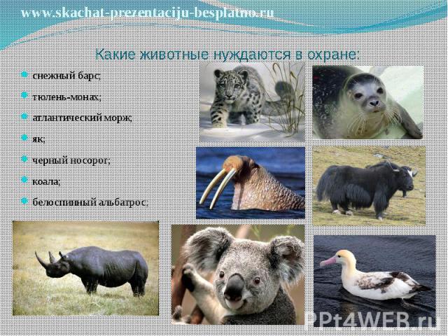 Какие животные нуждаются в охране: снежный барс; тюлень-монах; атлантический морж; як; черный носорог; коала; белоспинный альбатрос;