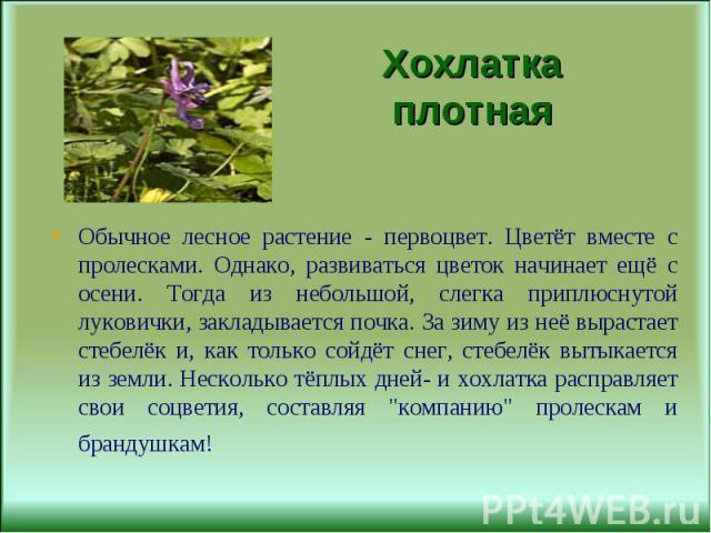 Обычное лесное растение - первоцвет. Цветёт вместе с пролесками. Однако, развиваться цветок начинает ещё с осени. Тогда из небольшой, слегка приплюснутой луковички, закладывается почка. За зиму из неё вырастает стебелёк и, как только сойдёт снег, ст…