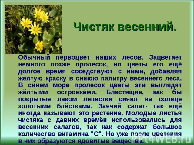 Обычный первоцвет наших лесов. Зацветает немного позже пролесок, но цветы его ещё долгое время соседствуют с ними, добавляя жёлтую краску в синюю палитру весеннего леса. В синем море пролесок цветы эти выглядят жёлтыми островками. Блестящие, как бы …