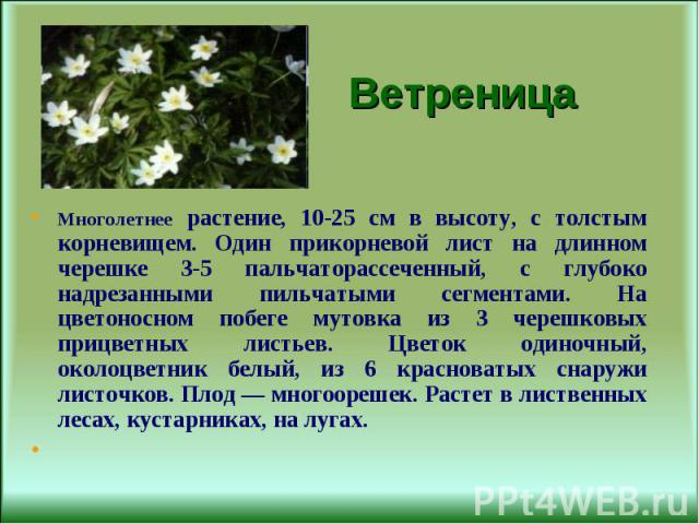 Многолетнее растение, 10-25 см в высоту, с толстым корневищем. Один прикорневой лист на длинном черешке 3-5 пальчаторассеченный, с глубоко надрезанными пильчатыми сегментами. На цветоносном побеге мутовка из 3 черешковых прицветных листьев. Цветок о…