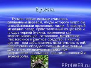 Бузина. Бузина черная исстари считалась священным деревом, ягоды которого будто