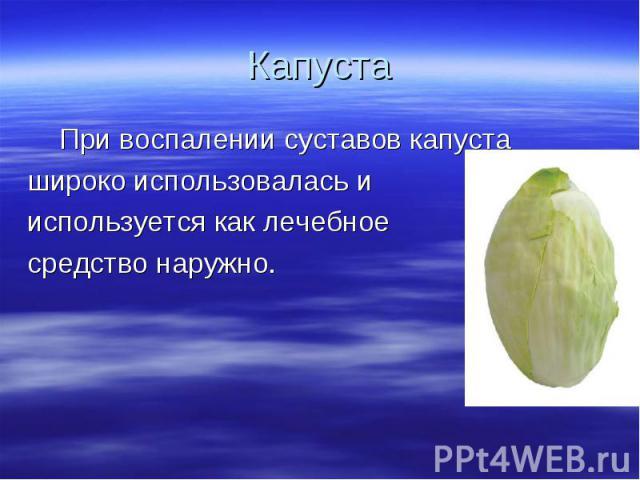 Капуста При воспалении суставов капуста широко использовалась и используется как лечебное средство наружно.