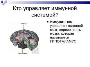 Иммунитетом управляет головной мозг, вернее часть мозга, которая называется ГИПО
