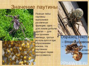Значение паутины