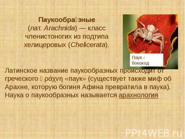Паукообра зные (лат.Arachnida)— класс членистоногих из подтипа хелицеровых (Chelicerata). Латинское название паукообразных происходит от греческого ἀράχνη «паук» (существует также миф об Арахне, которую богиня Афина превратила в паука). …