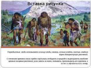 Первобытные люди использовали в пищу плоды, семена, сочные стебли, листья, сладк