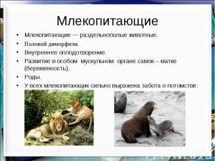 Млекопитающие Млекопитающие — раздельнополые животные. Половой диморфизм. Внутре