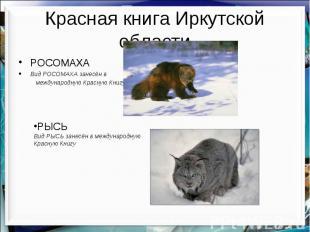 Красная книга Иркутской области РОСОМАХА Вид РОСОМАХА занесён в международную Кр