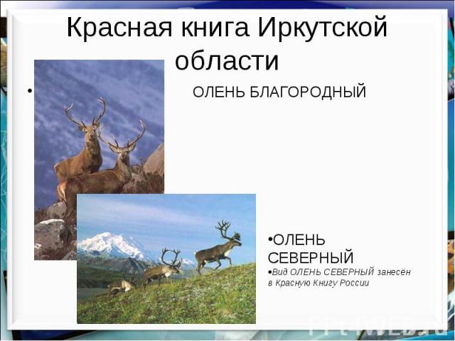 Красная книга Иркутской области ОЛЕНЬ БЛАГОРОДНЫЙ