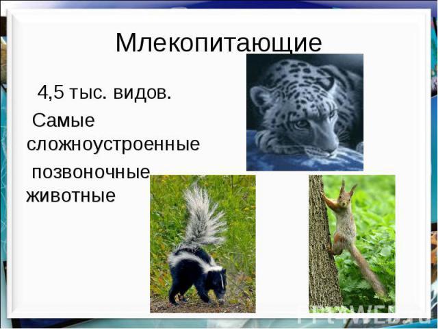 Млекопитающие 4,5 тыс. видов. Самые сложноустроенные позвоночные животные