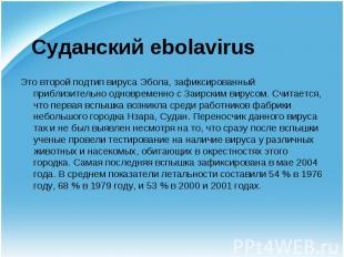 Это второй подтип вируса Эбола, зафиксированный приблизительно одновременно с За