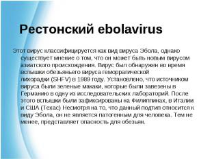 Этот вирус классифицируется как вид вируса Эбола, однако существует мнение о том