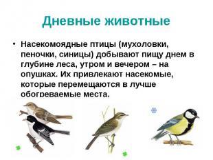 Дневные животные Насекомоядные птицы (мухоловки, пеночки, синицы) добывают пищу