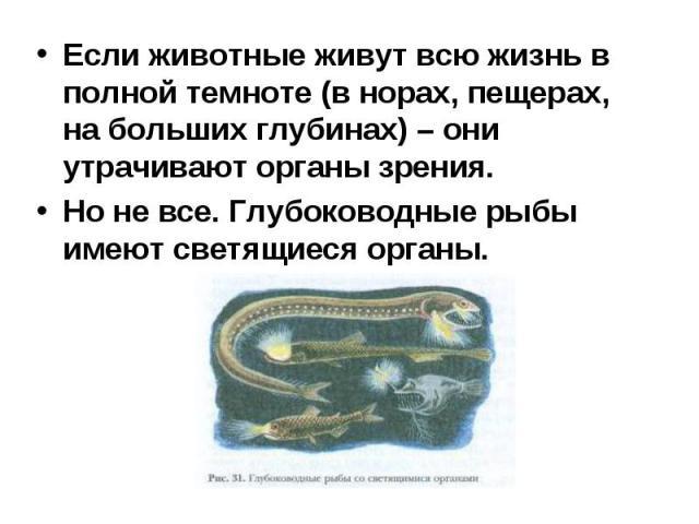 Если животные живут всю жизнь в полной темноте (в норах, пещерах, на больших глубинах) – они утрачивают органы зрения. Если животные живут всю жизнь в полной темноте (в норах, пещерах, на больших глубинах) – они утрачивают органы зрения. Но не все. …