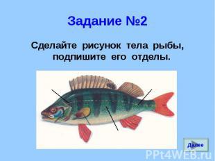 Сделайте рисунок тела рыбы, подпишите его отделы. Сделайте рисунок тела рыбы, по