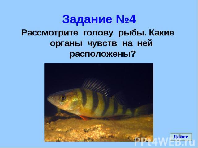 Рассмотрите голову рыбы. Какие органы чувств на ней расположены? Рассмотрите голову рыбы. Какие органы чувств на ней расположены?