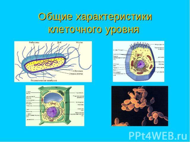 Общие характеристики клеточного уровня