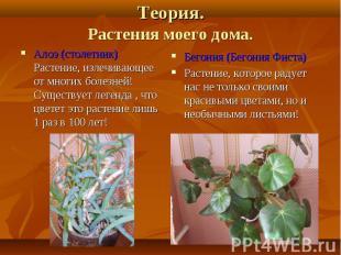 Алоэ (столетник) Растение, излечивающее от многих болезней! Существует легенда ,