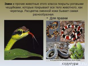 Змеи и прочие животные этого класса покрыты роговыми чешуйками, которые покрываю
