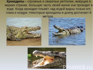 Крокодилы – огромные и свирепые рептилии, живущие в жарких странах. Большую част