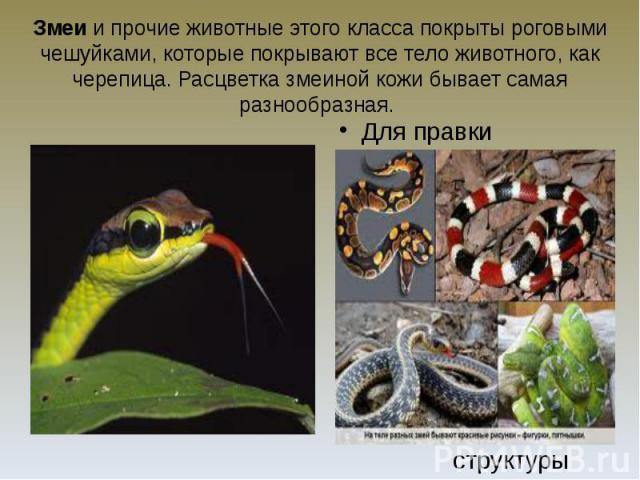 Змеи и прочие животные этого класса покрыты роговыми чешуйками, которые покрывают все тело животного, как черепица. Расцветка змеиной кожи бывает самая разнообразная.