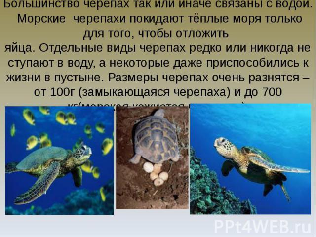 Большинство черепах так или иначе связаны с водой. Морские черепахи покидают тёплые моря только для того, чтобы отложить яйца. Отдельные виды черепах редко или никогда не ступают в воду, а некоторые даже приспособились к жизни в пустыне. Размеры чер…