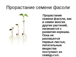 Прорастание семени фасоли, как и семян многих других растений, начинается с разв