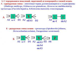 5. C чередованием поколений, эндогенной агломерацией и сменой хозяев. А - однокр